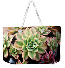 Weekender Tote Bag featuring the photograph Cute Succulent by Top Wallpapers