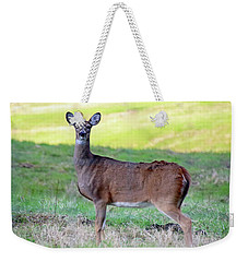 Weekender Tote Bag featuring the photograph Deer Standing In A Field by Angela Murdock