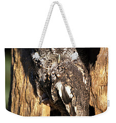 Weekender Tote Bag featuring the photograph Eastern Screech Owl 92515 by Rick Veldman