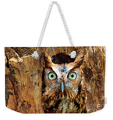 Eastern Screech Owl Perched In A Hole In A Tree Weekender Tote Bag