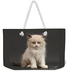 Weekender Tote Bag featuring the photograph Electric Kitten by Warren Photographic