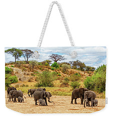 Weekender Tote Bag featuring the photograph Elephants Drill For Water by Kay Brewer