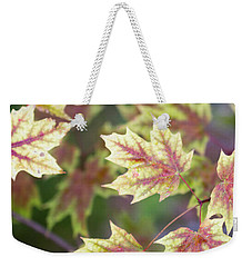 Fall Red And Yellow Leaves 10081501 Weekender Tote Bag