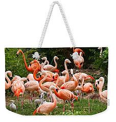 Weekender Tote Bag featuring the photograph Flamingos Outdoors by Top Wallpapers