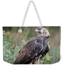 Weekender Tote Bag featuring the photograph Golden Eagle On Rock 92515 by Rick Veldman