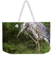 Weekender Tote Bag featuring the photograph Great Blue Heron Itch by Donald Brown