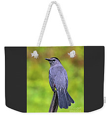 Weekender Tote Bag featuring the photograph Grey Catbird by Debbie Stahre