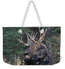 Head Study Of Bull Moose Weekender Tote Bag