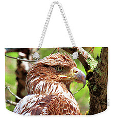 Weekender Tote Bag featuring the photograph Immature Eagle by Debbie Stahre