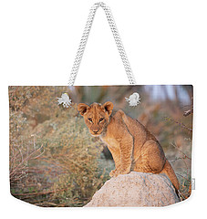 Weekender Tote Bag featuring the photograph Lion Cub On Termite Hill by John Rodrigues
