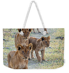 Weekender Tote Bag featuring the photograph Lion Cubs On The Trail by John Rodrigues