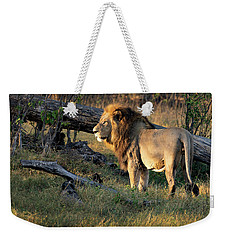 Male Lion In Botswana Weekender Tote Bag