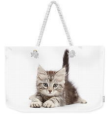 Weekender Tote Bag featuring the photograph Momentary Paws by Warren Photographic