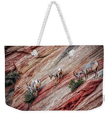 Weekender Tote Bag featuring the photograph Nimble Mountain Goats 5694 by Donald Brown