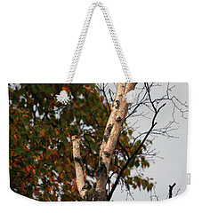 Weekender Tote Bag featuring the photograph Northern Hawk Owl 101402 by Rick Veldman