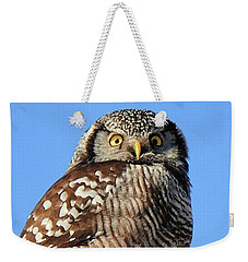 Weekender Tote Bag featuring the photograph Northern Hawk-owl by Debbie Stahre
