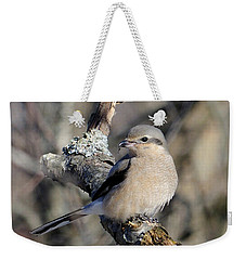 Weekender Tote Bag featuring the photograph Northern Shrike by Debbie Stahre