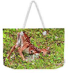 Weekender Tote Bag featuring the photograph Oh Deer by Debbie Stahre