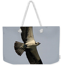 Weekender Tote Bag featuring the photograph Osprey With Fish by Rick Veldman