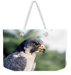 Weekender Tote Bag featuring the photograph Peregrine Falcon by Rick Veldman