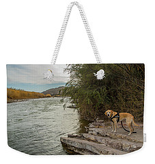 Weekender Tote Bag featuring the photograph Photo Dog Jackson At The Rio Grande by Matthew Irvin