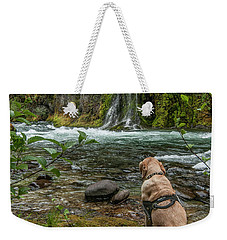 Weekender Tote Bag featuring the photograph Photo Dog Jackson Contemplating His Next Photograph  by Matthew Irvin