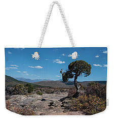 Pinyon Pine With North Rim In Background Black Canyon Of The Gunnison Weekender Tote Bag