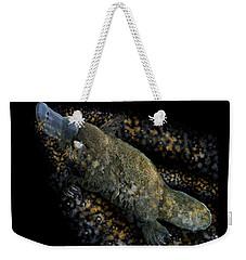 Platypus At Night Weekender Tote Bag
