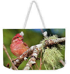 Weekender Tote Bag featuring the photograph Purple Finch by Debbie Stahre