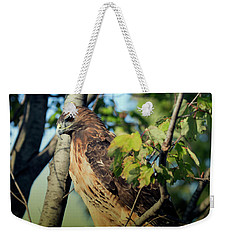Weekender Tote Bag featuring the photograph Red-tailed Hawk Looking Down From Tree by Rick Veldman