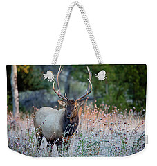 Weekender Tote Bag featuring the photograph Rocky Mountain Wildlife Bull Elk Sunrise by Nathan Bush