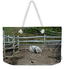 Snoozing Hog Weekender Tote Bag