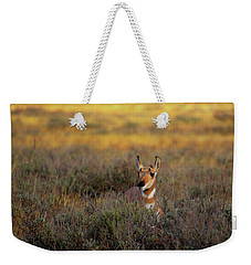 Weekender Tote Bag featuring the photograph Sunset Pronghorn by Pete Federico