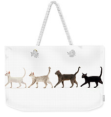 Weekender Tote Bag featuring the photograph The Kits Parade - Four by Warren Photographic