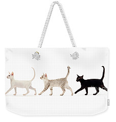 The Kits Parade - Three Weekender Tote Bag