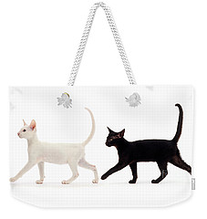 Weekender Tote Bag featuring the photograph The Kits Parade - Two by Warren Photographic