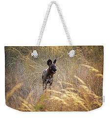 Weekender Tote Bag featuring the photograph The Wild Dog Of Africa by John Rodrigues