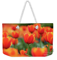 Weekender Tote Bag featuring the photograph Tulipa Worlds Favourite Flowers  by Tim Gainey