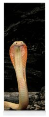 Designs Similar to Albino Monocled Cobra Naja Naja