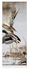 Avian Yoga Mats