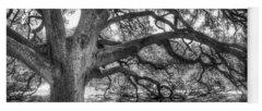 Tree Bark Yoga Mats