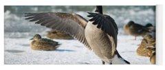 Canada Goose Photographs Yoga Mats