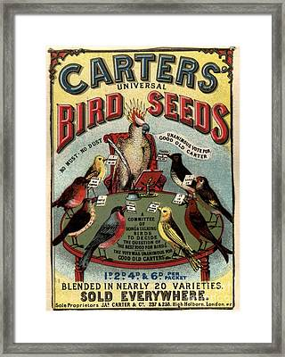 1890s Uk Carters Bird Seed Birds Framed Print by The Advertising Archives