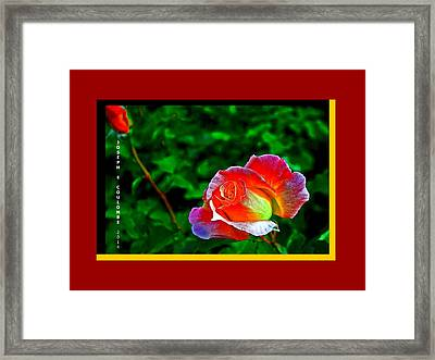 A Blended Rose Framed Print by Joseph Coulombe