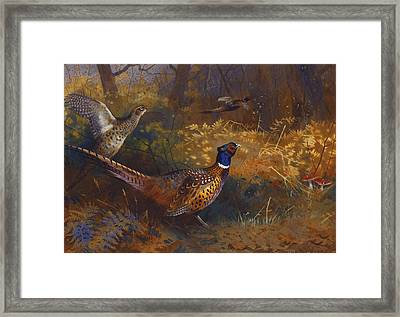 A Cock And Hen Pheasant At The Edge Of A Wood Framed Print by Archibald Thorburn