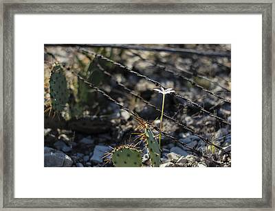 A Flower Among Thorns Framed Print
