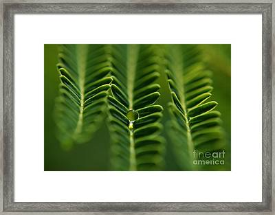 A Green Drop Framed Print by Michelle Meenawong