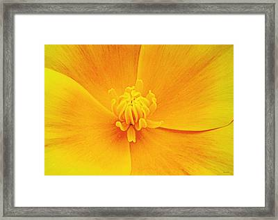 A Study In Yellow- Centerpiece 003 Framed Print by George Bostian