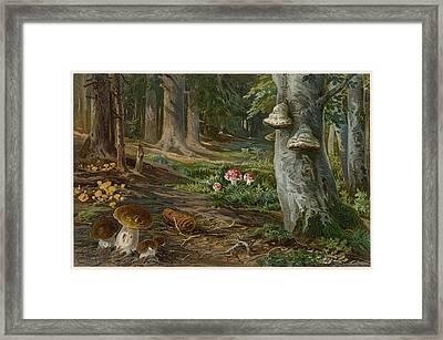 A Variety Of Mushrooms Growing Framed Print