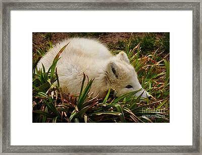 Framed Print featuring the photograph  A White Fox by Mindy Bench